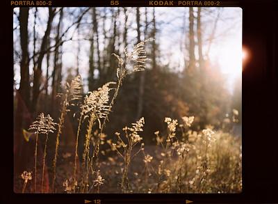 180114 Im Wald mit der Makina