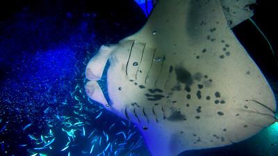 Hawaii Underwater (Big Island)