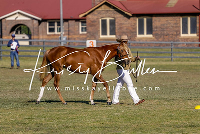 Armidale Hack & Breed Show