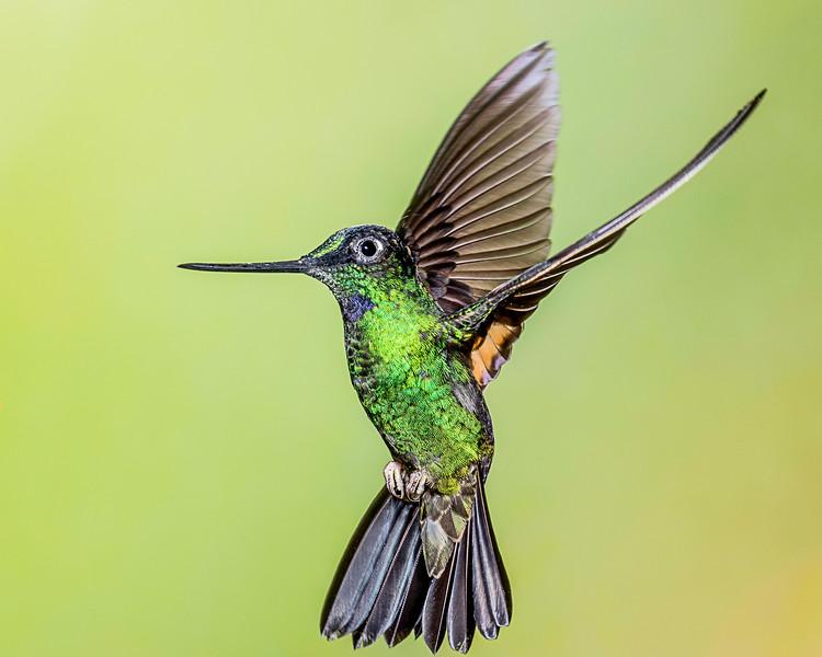 Hummingbird, taken in Ecuador
