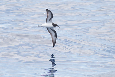 2013 October 20 Southport Pelagic