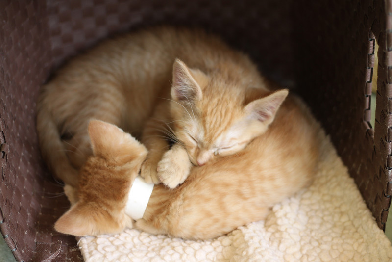 Kittens - Foxtrot and Jive.JPG
