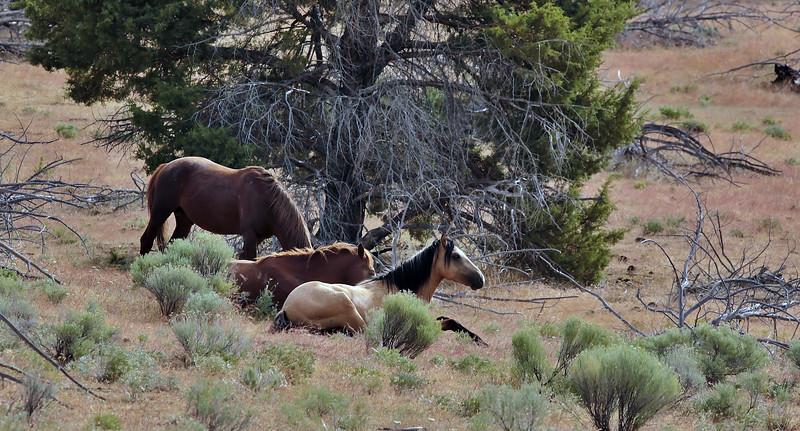 Warm Springs Horses