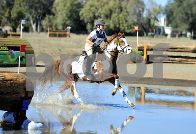 show jumping, arabians, eventing, dressage