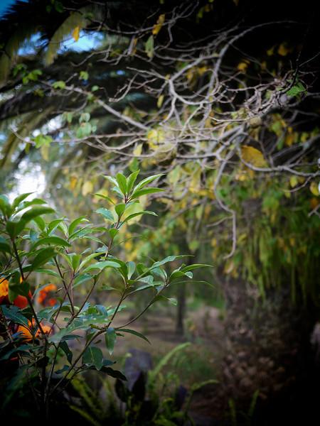 plants alive