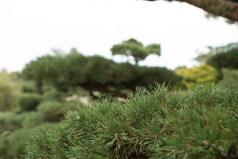 Chicago Botanic Garden 092.jpg