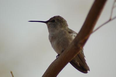 2005, Tucson in December