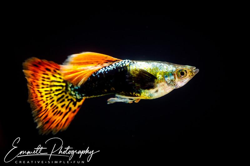 20200208-Fish-8.jpg