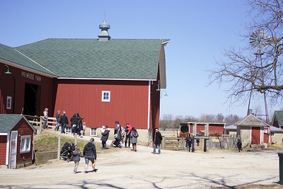 Springtime at Primrose Farm