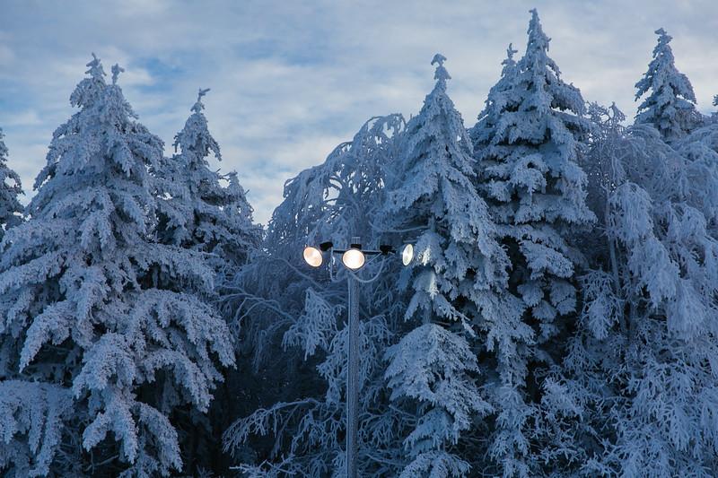 2020-02-01_SN_KS_Frosty Trees-0717.jpg