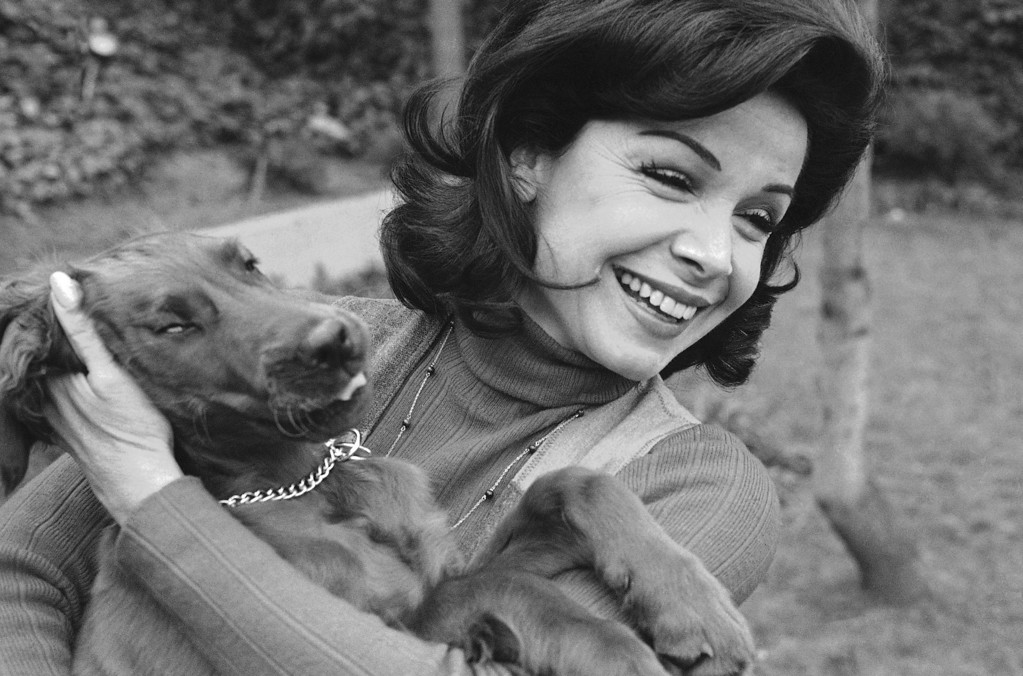 . Former Mouseketeer Annette Funicello gets an enthusiastic greeting from Skippy, her Irish setter puppy, at home in Encino, Calif., March 13, 1978.  (AP Photo/George Brich)