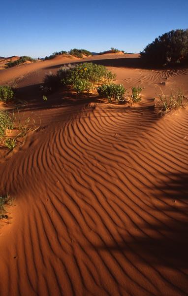 Coral Pink Sand Dunes - state-park-frank-jensen - KCOT.jpg