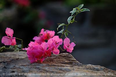015-flower-dsm-14jan09-002-1192