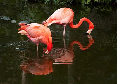 Flamingo Gardens 1-26-13