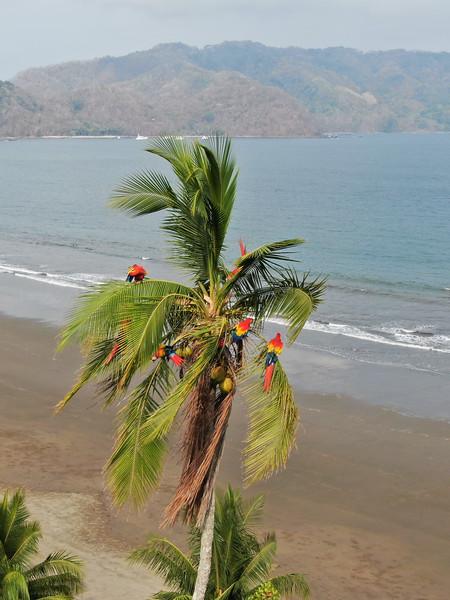 "Macaw ""Christmas""Tree."