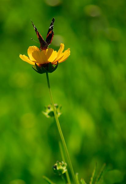 Brecksville Wildflowers