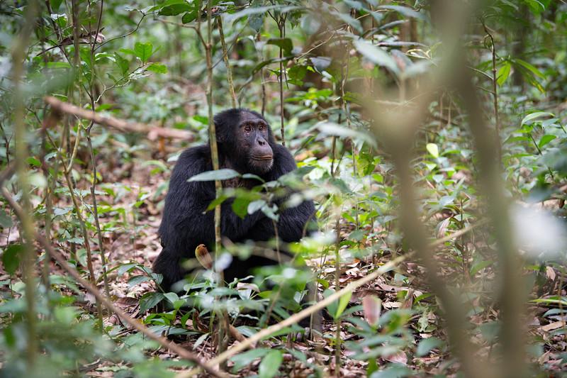 Uganda_T_Chimps-70.jpg