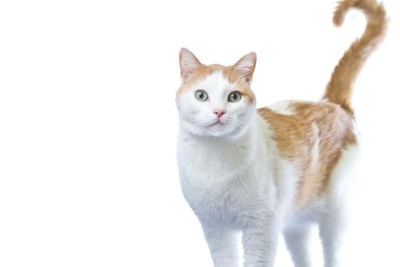 1202_Cats_067.jpg