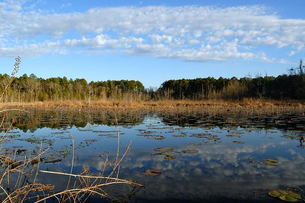 Carolina Bay Wetlands