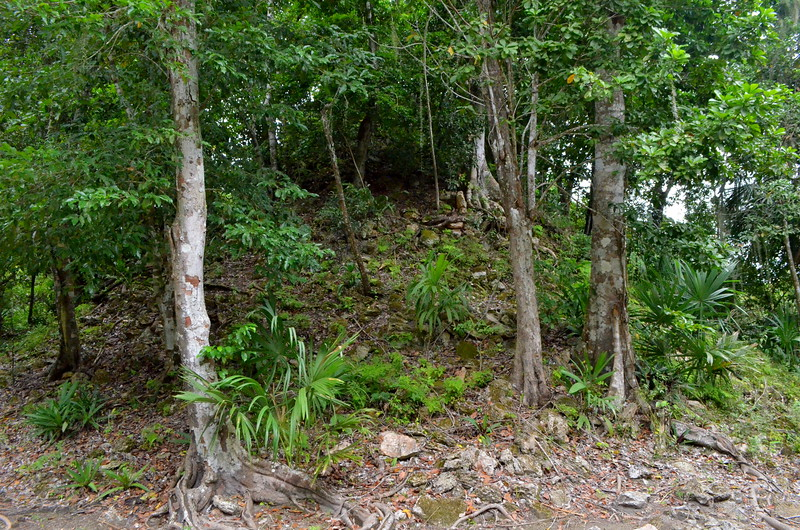 Jungle has overtaken many of these Mayan Temples.  Picture shows a temple not yet excavated.