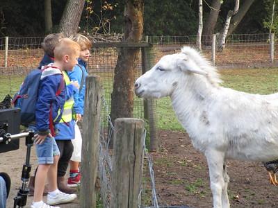 Week van het bos: kinderboerderij Mikerf