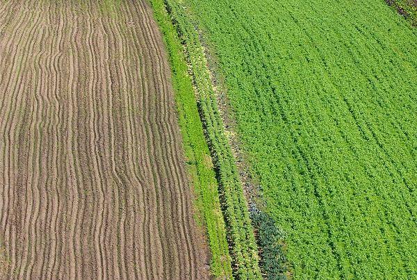 Patterns in a field, Santa Cruz county ,California.