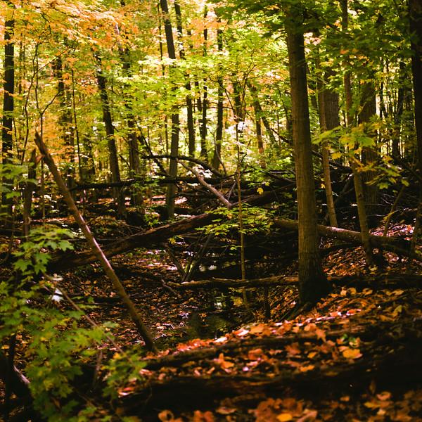 Autumn Hike 120 Film-00025.jpg