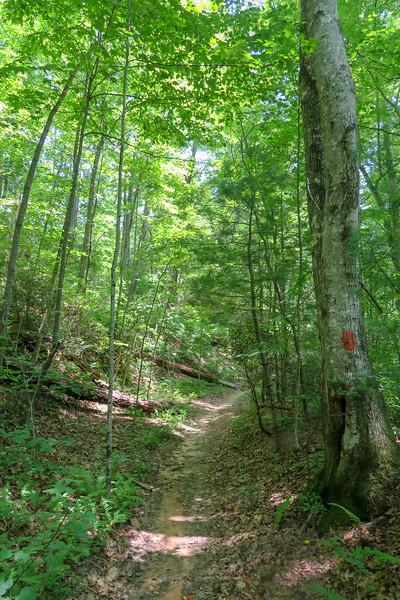 Buckhorn Gap Trail -- 3,300'