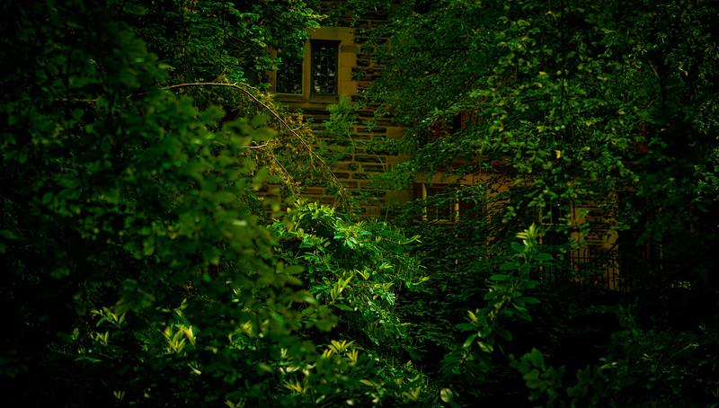 Forest Shadows-021.jpg