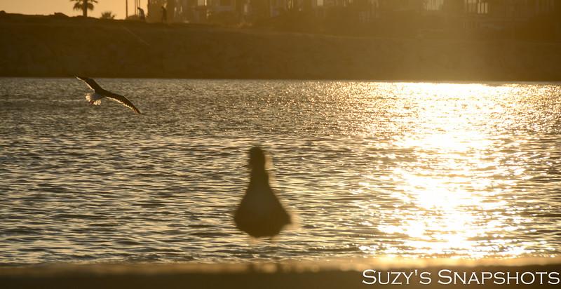 SuzysSnapshots_Mikayla-22 (2).jpg