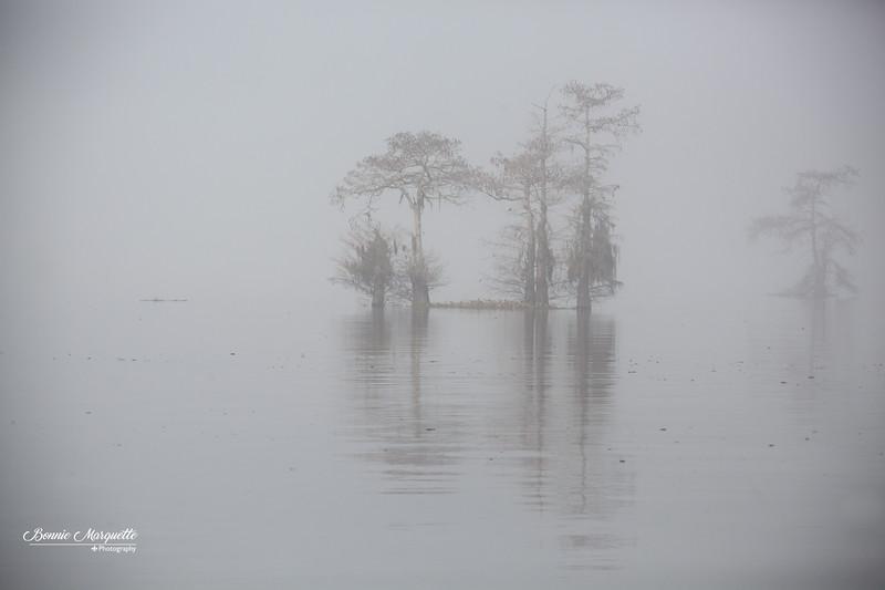 Henderson Swamp 1 16 20-94.jpg