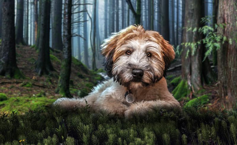 forest-dog1.jpg