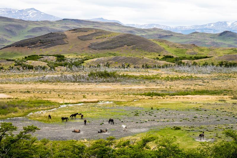 Patagonia-27.jpg