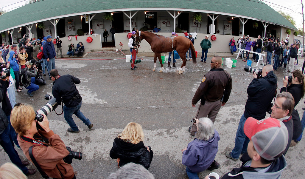 . Kentucky Derby entrant California Chrome gets a bath after a morning workout at Churchill Downs Thursday, May 1, 2014, in Louisville, Ky. (AP Photo/Charlie Riedel)
