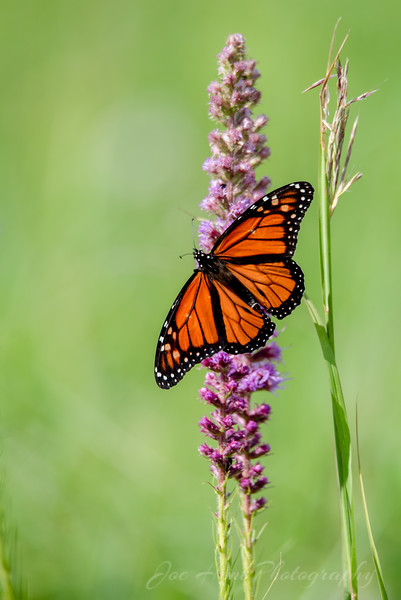 Butterflies, Moths, and More