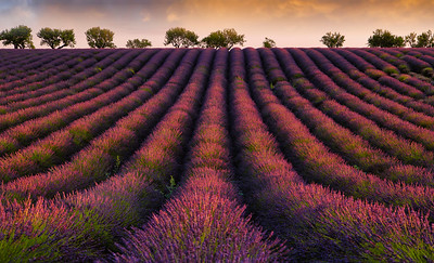 Camargue and Provence