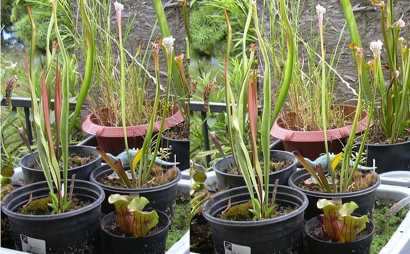 2120160219-An-assortment-of-plants..jpg
