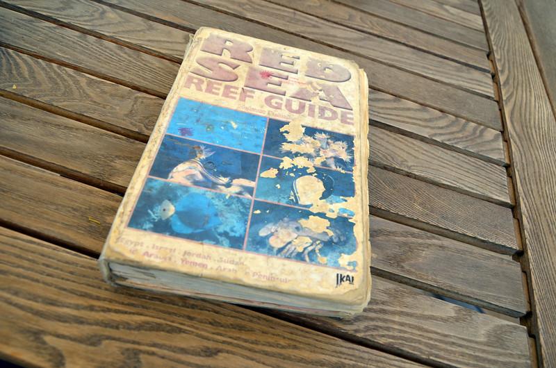 DSC_9681-red-sea-reef-guide.JPG
