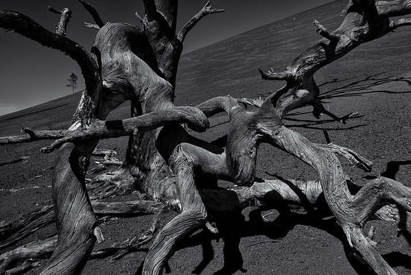Volcanic Trees