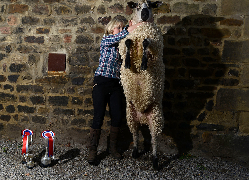 . MASHAM, UNITED KINGDOM - SEPTEMBER 28: Lyndsey Bainbridge of Reeth poses with her Teeswater Gimmer Shearling which was voted supreme champion during the sheep fair in Masham September 28, 2013 in Masham. The fair celebrating its 25th year consists of many events over the weekend including many sheep catagories, sheep racing, sheepdog demonstations, fleece stalls, flower festival and exhibitions (Photo by Nigel Roddis/Getty Images)