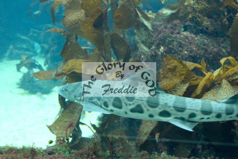 Aquarium 20136.jpg