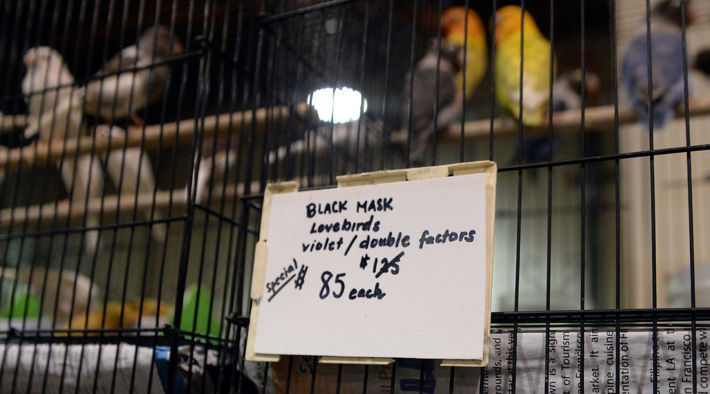 . Love birds on sale during the Reptile Super Show which is the world\'s largest reptile show with more than 500 tables of rare & unique animals including lizards, turtles, frogs, supplies at the Fairplex in Pomona, Calif., on Saturday, Jan.4, 2014.   (Keith Birmingham Pasadena Star-News)