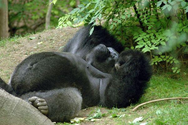 Bronx Zoo - Summer 2004