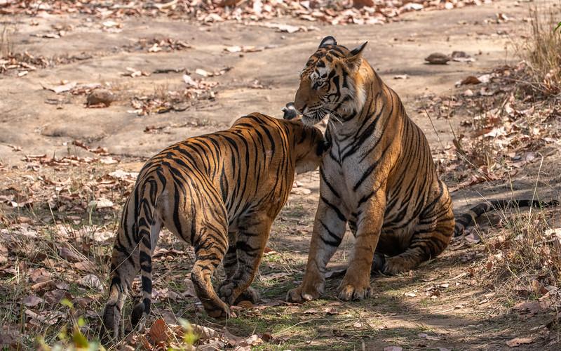 India_April_2019-875.jpg