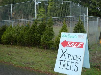 Christmas Tree Pickup - Nov 24