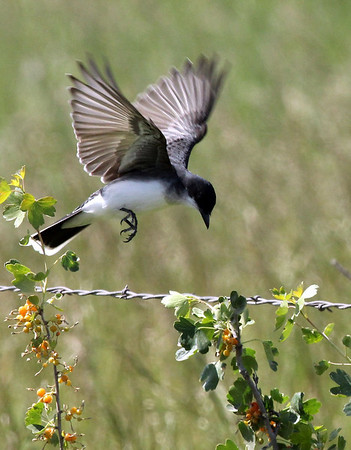 Songbirds: Finches, flycatchers, tanagers, orioles, wrens, swallows, warblers