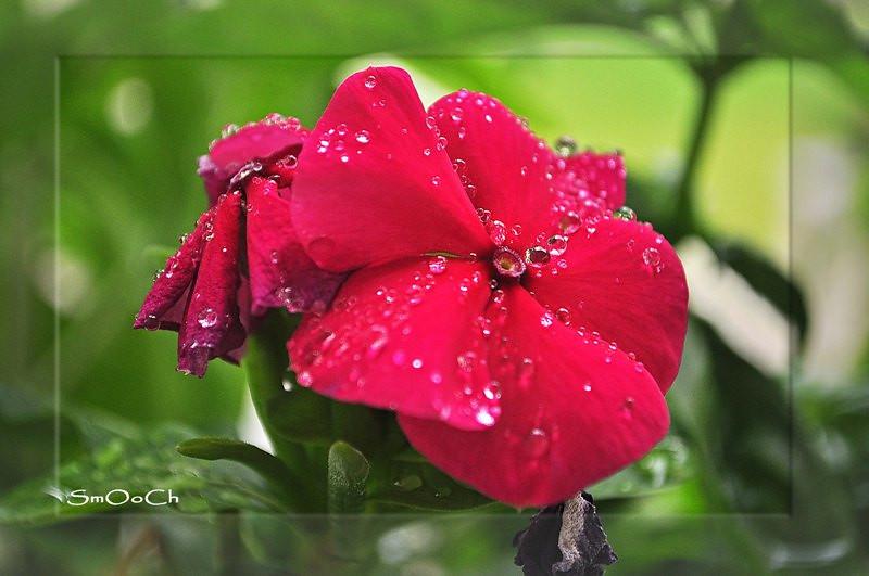 fiore viola.jpg