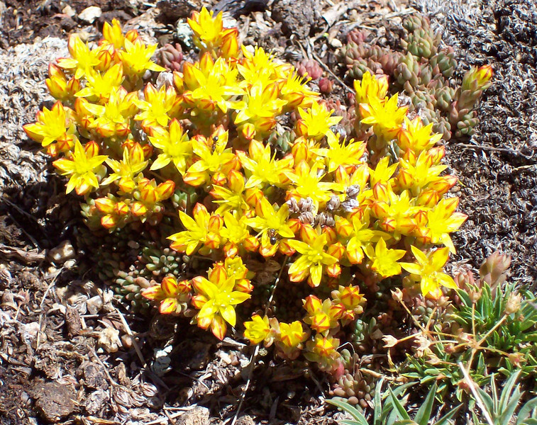 Ute Trail Flowers.jpg