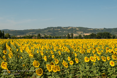 Fields of Northern Italy