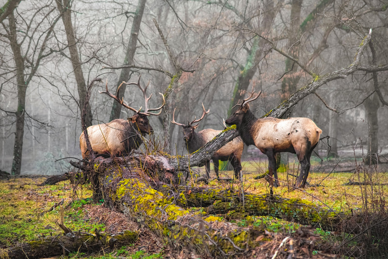 Day Of The Elk